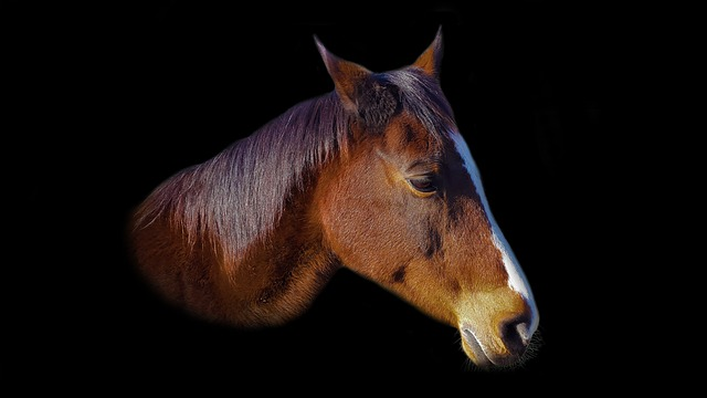 crédit cheval